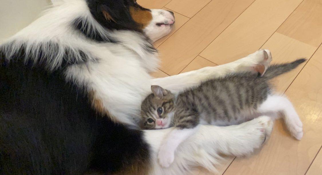 名はキウイ、人呼んで犬たらし猫と発します