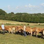 Image for the Tweet beginning: Tournage ce matin en ferme