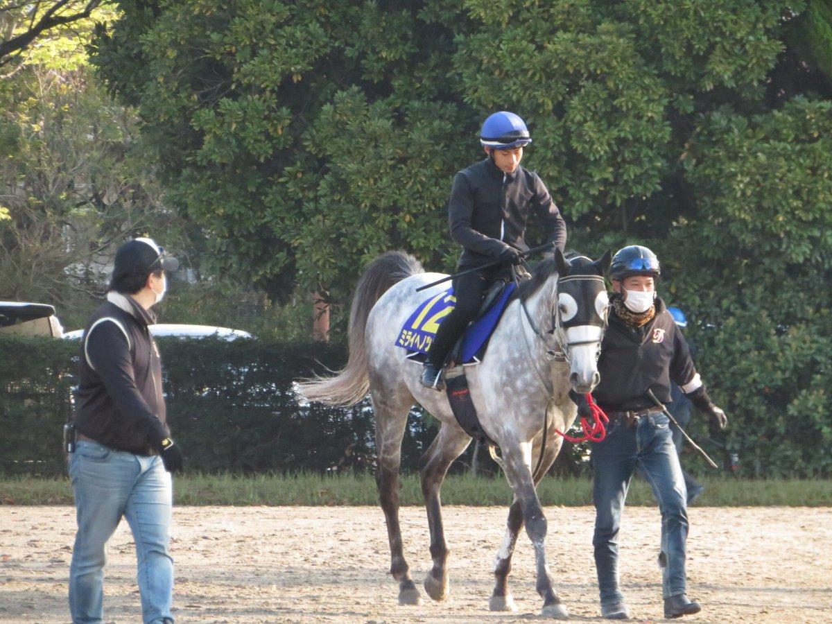 今年のGⅢダイヤモンドSを勝ったミライヘノツバサが右前浅屈腱炎を発症し、現役を引退することになりました😢非常に残念ですが、大怪我から復帰を果たして重賞タイトルをひとつ獲得することができたのは本当に良かったです✨今後は東京競馬場で誘導馬となるそうです🐴第二の馬生もがんばれ‼️‼️‼️‼️