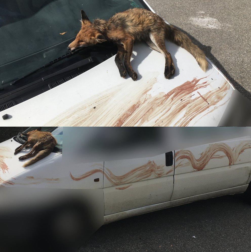 Voilà ce que je découvre ce matin sur ma voiture garée à côté de chez moi. Je ne sais pas qui sont les auteurs de cet acte. Il est en tout cas dans la continuité des menaces que je reçois de la part de chasseurs depuis des années. Ça renforce ma motivation. https://t.co/hjsWTTtLV7
