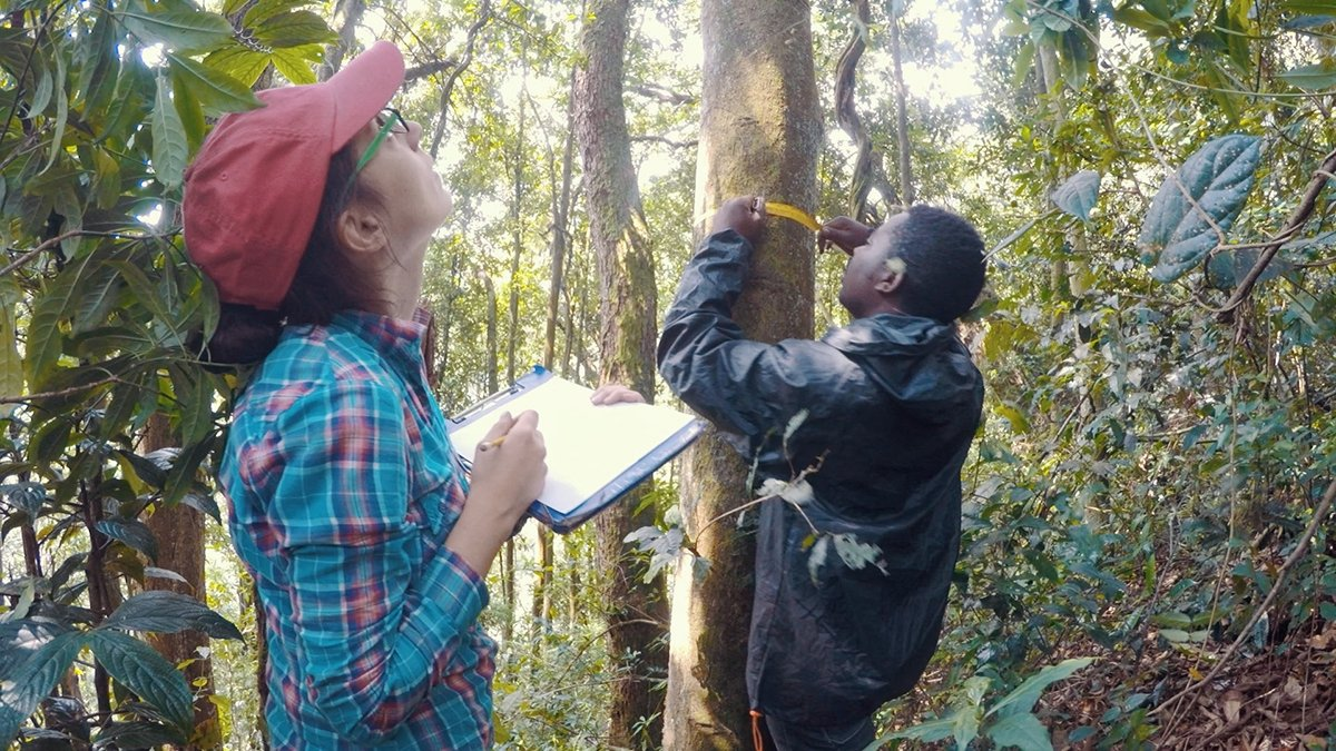 Congratulations to Dr Aida Cuni-Sanchez of @YorkEnvironment who is the @Loreal-@UNESCO #WomenInScience Sustainable Development Rising Talent winner 2020 for her research into the protection and sustainable use of African rainforests. https://t.co/PaVQuUPR05 https://t.co/adwmqCDlCY