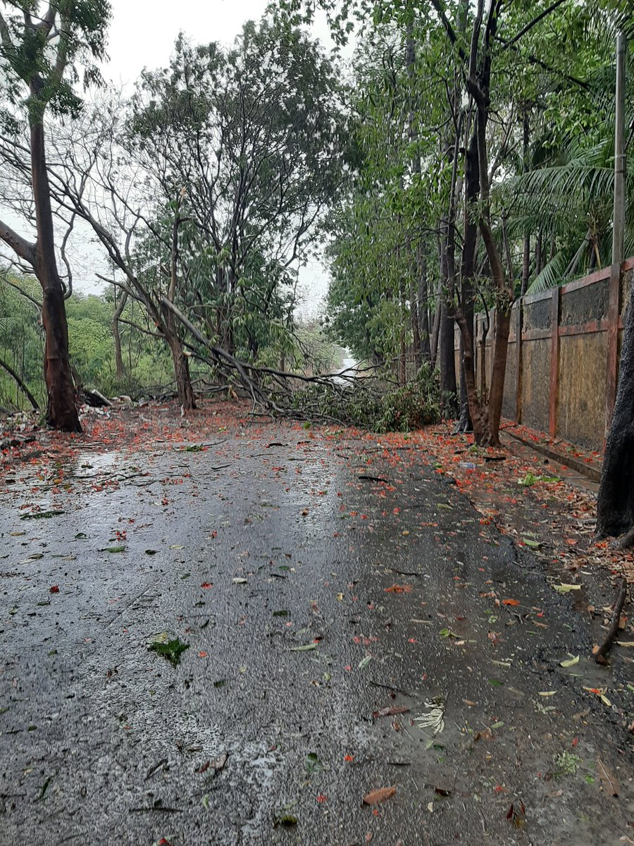 @mybmcWardN  Tree fell down near New Ghatkopar Pumping Station pic.twitter.com/daEikxB6p0