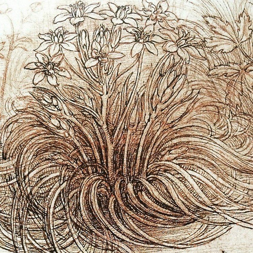 Details of studies by Leonardo da Vinci <br>http://pic.twitter.com/uVA7e8rzR8