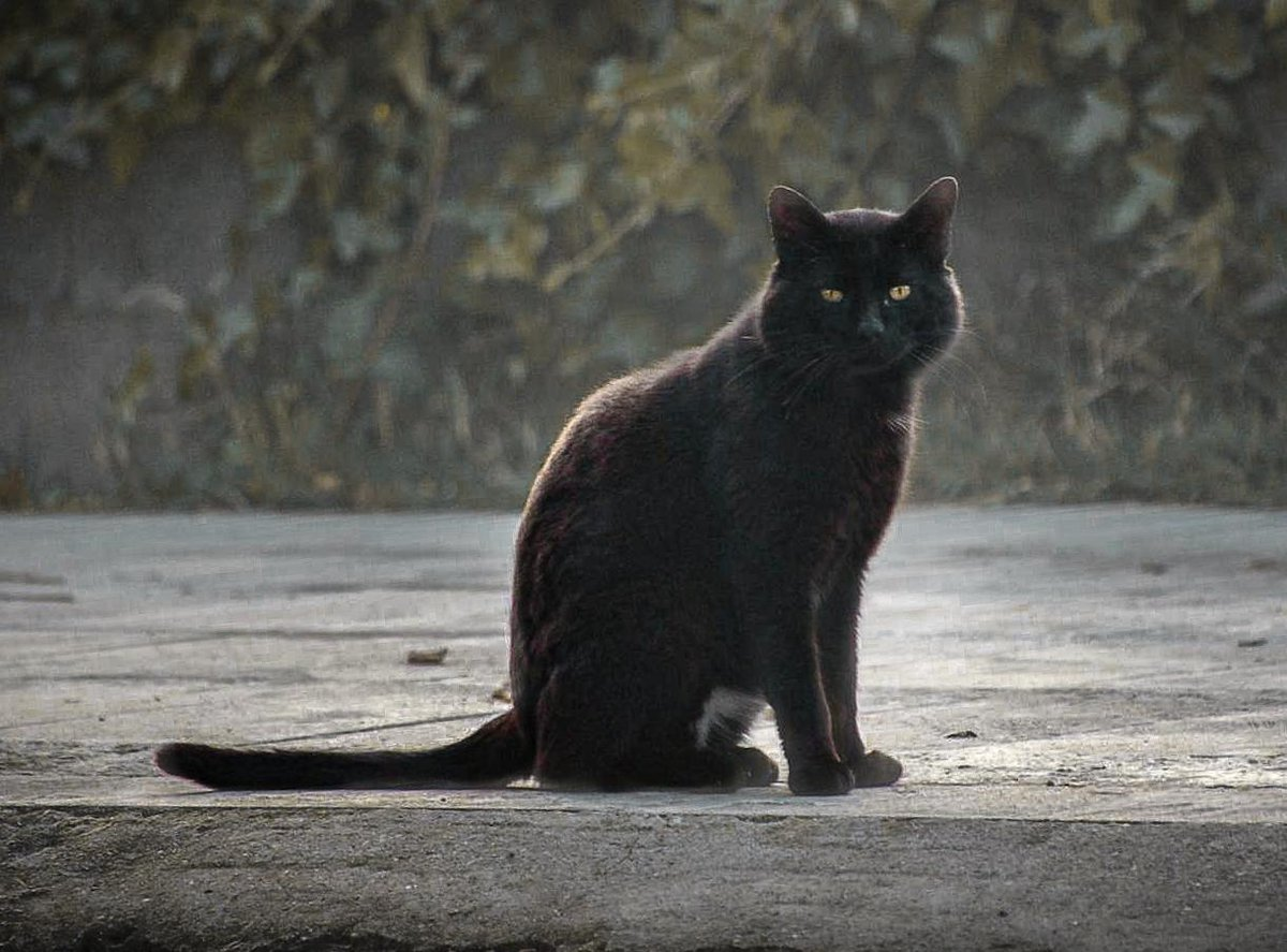 #photo #foto #photography #fotografia #photographer #fotografa #nikon #nikonista #nikond3200 #nikoncamera #nikonphotography #cat #atardecer #gatonegro #blackcat #españa #zaragoza #nature #naturaleza #naturelovers #naturephotography pic.twitter.com/bd9p5opLXi
