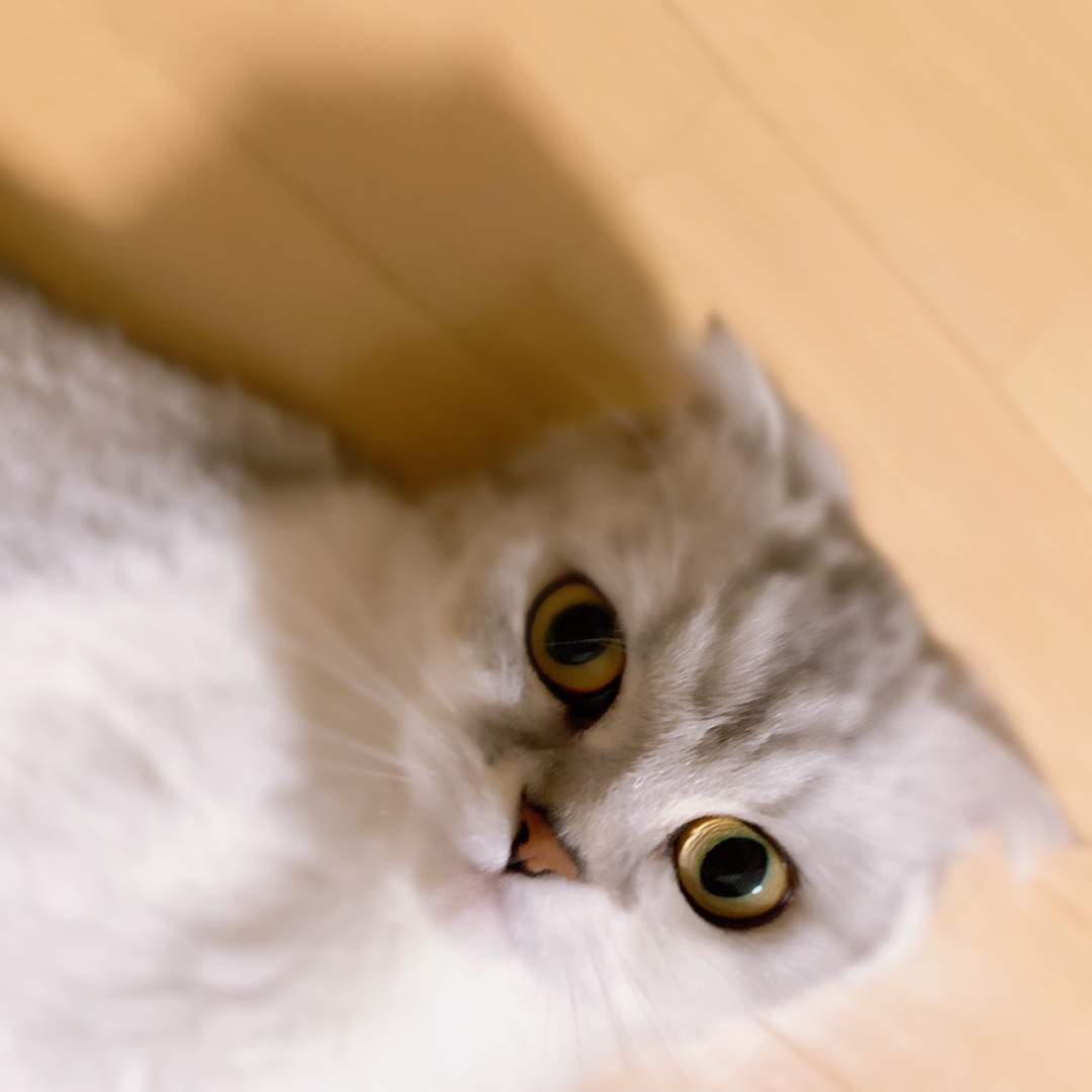 【Blog更新】 ♪.気まぐれすいちゃん!インスタライブ! 金澤朋子:…  #juicejuice