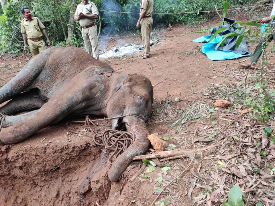 Foeticide in India has reached new heights... Now they killed a baby elephant inside the womb (Mama Elephant died too later)!  SHAME!  #Kerela #kerelaElephant #saveanimals #SaveElephants #india https://t.co/CvLQcPcsQl