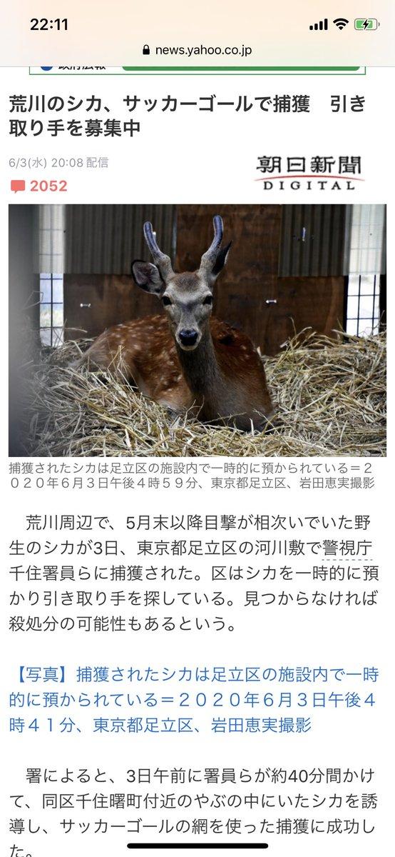 荒川のシカさんが捕獲されましたね。こちらの鹿、引き取り手がいない場合は殺処分に…動物園に何件か問い合わせしたところ、野生動物が持つ病気が園内の飼育動物に感染する恐れもあるとして、断られたそうです。みなさん拡散よろしくお願いします。