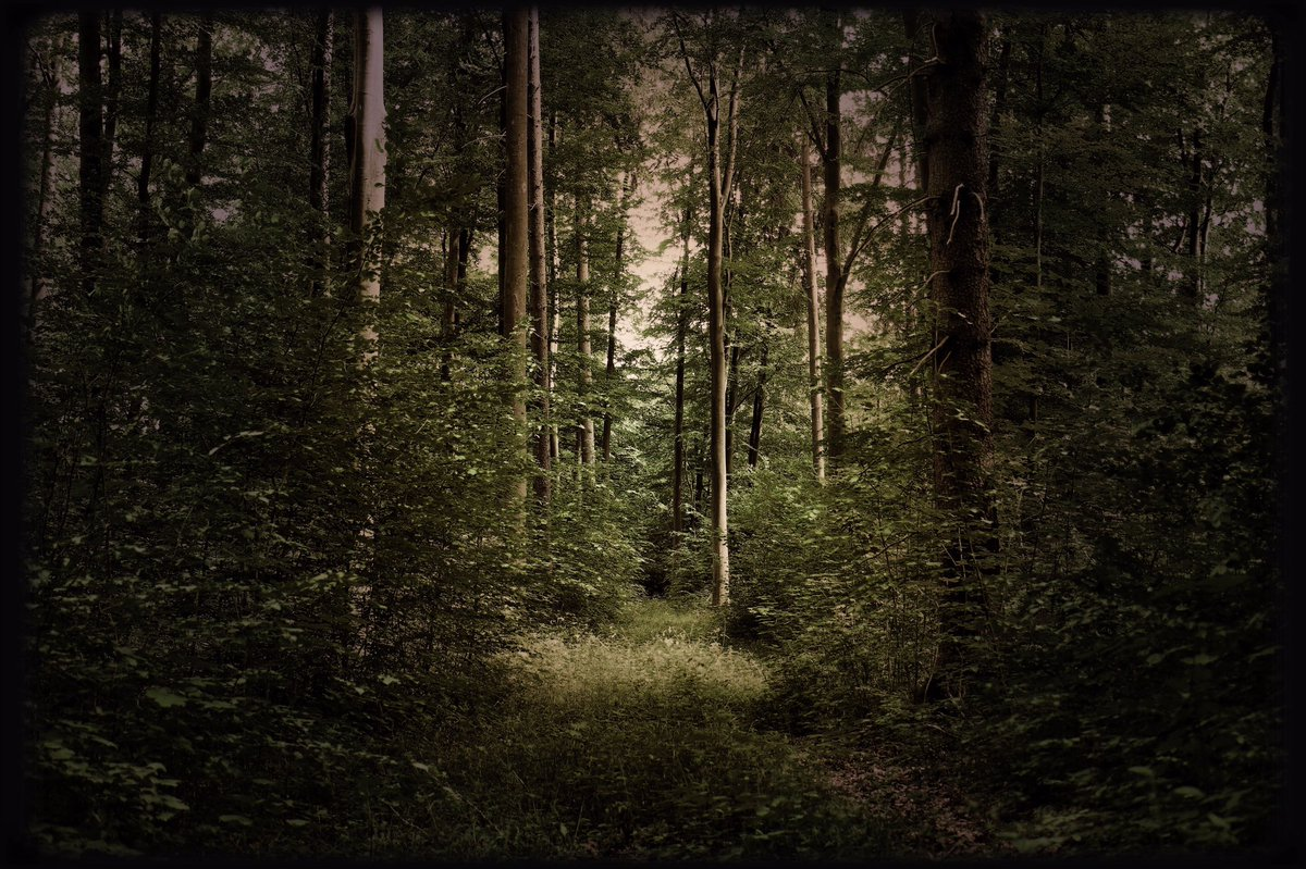 ... fairytale forest ... #forest #trees #twilight #countryside #nature #naturephotography #mood #atmosphere #dream #magic #spell #hideaway #beauty #peace #silence #imagination #fairytale #life #secret pic.twitter.com/cNJGGW03ke