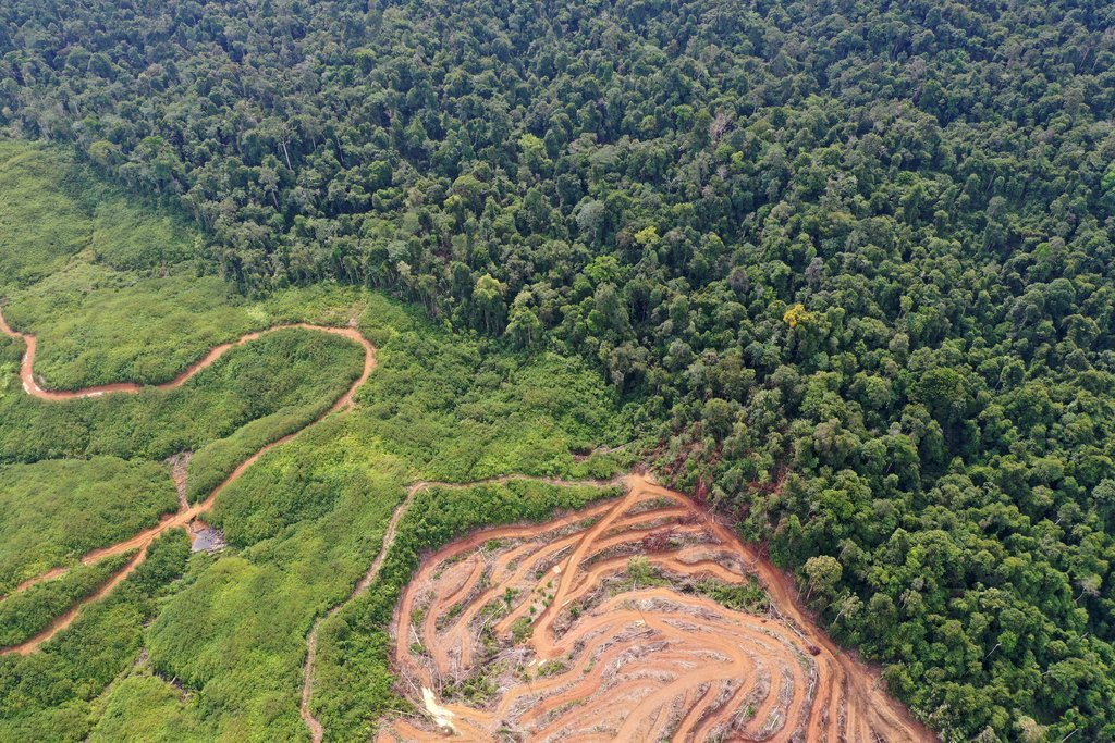 Extreme Temperature Diary- WED June 3, 2020 Main Topic: #Rainforest Loss Update via @nytimes (New post at: guyonclimate.com/2020/06/03/ext…) With more #COVID19, #environmental & #weather news @maddow. @GretaThunberg. @ClimateReality