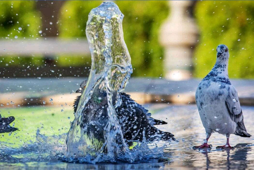 The pigeons. Accepted' the water #challenge  pic.twitter.com/KUTJR59pJc