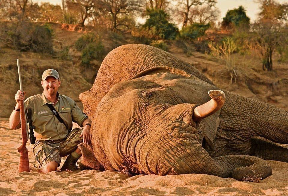 What a smug smile on Senior Consultant of Worldwide Trophy Adventures & 'Public Figure' Tim Herald's face, as he poses with the elephant he had just shot. Trophy hunters kill elephants cruelly for fun too. 😒 #BanTrophyHunting 🙏🏼RT https://t.co/q8diT5tyON @zbleumoon @willtravers https://t.co/jf3PJErIsv