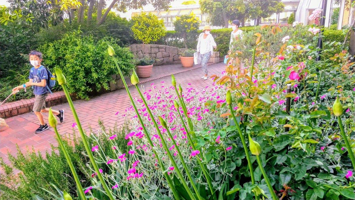 RT @39Escargot: rose garden,  3f.Takashimaya Department store Futakotamagawa,Tokyo 📷️byme.29 May 2020 https://t.co/D10j9x00hy