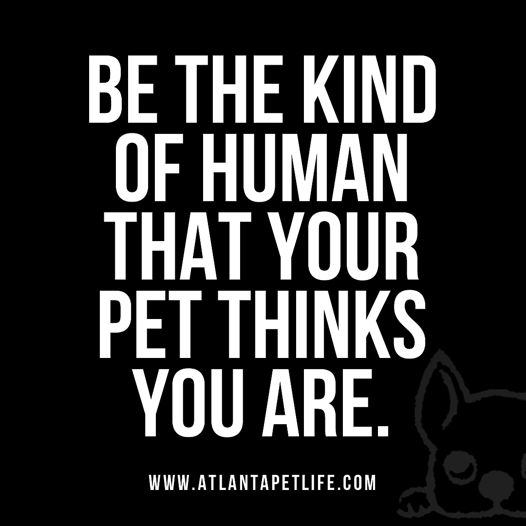 Be the kind of human that your pet thinks you are. . . . #atlantapetlife #dogist #atlpets #furendly #atlantapets #atlantadogs #dogfeature #pupsofig #puppiesofinsta #instapup #weratedogs #dailybarker #bestwoof #dogfeatures #topdogphoto #dailydog #dogsofatlanta #dogsofatlpic.twitter.com/nSaKtuU6NL