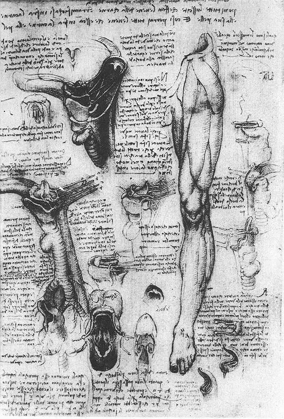 Anatomical studies (larynx and leg), 1510 #leonardodavinci #davinci<br>http://pic.twitter.com/PoZCUEEEkp