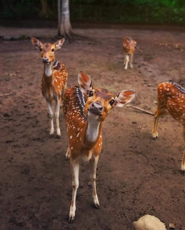 This photo expresses the warm love behind the deer!! So lovely!! How curious!! 🦌🦌🦌 Hugs #photography #NaturePhotography #naturelover #beautifulworld #AnimalKingdom #PictureOfTheDay https://t.co/YzM07zSJar