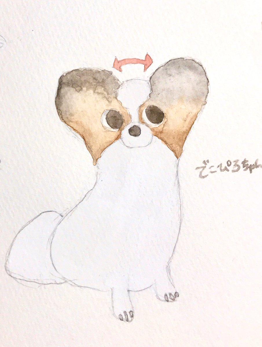 RT @lipoolfe: でこぴろちゃんとサマーカットちゃん  #パピヨン #犬好きさんと繋がりたい  #イラスト...