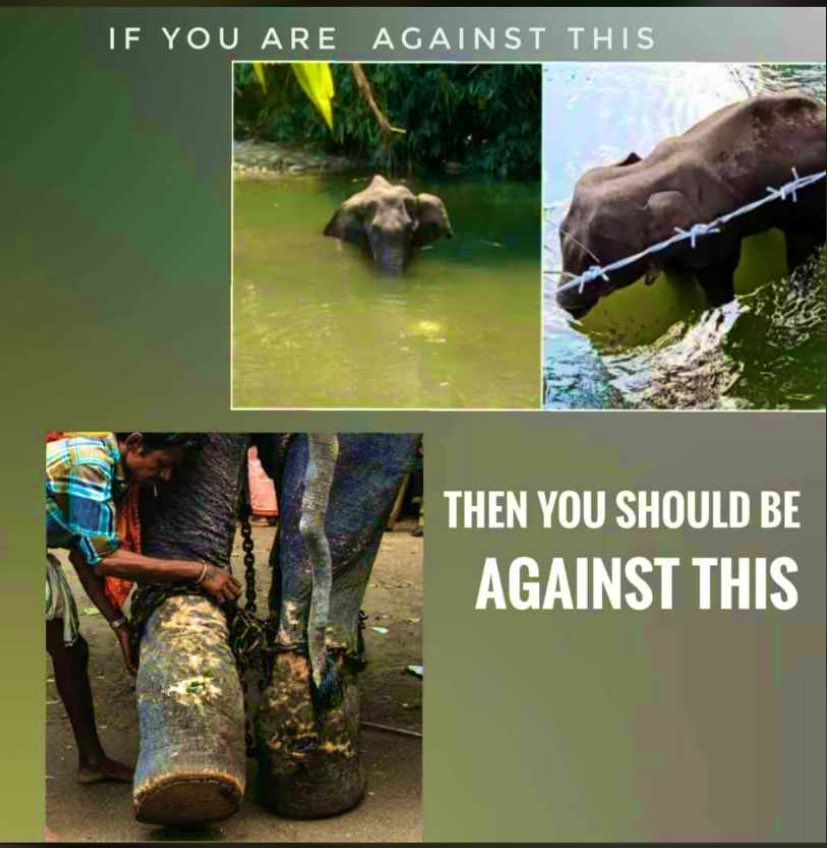 Don't pretend as an animal lover . If u really care then show it  . #Hashtags can't save animals ! pic.twitter.com/Q3SEdLMPYE