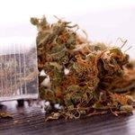 Image for the Tweet beginning: #cannabis #weed #marijuana Gov. Akeredolu