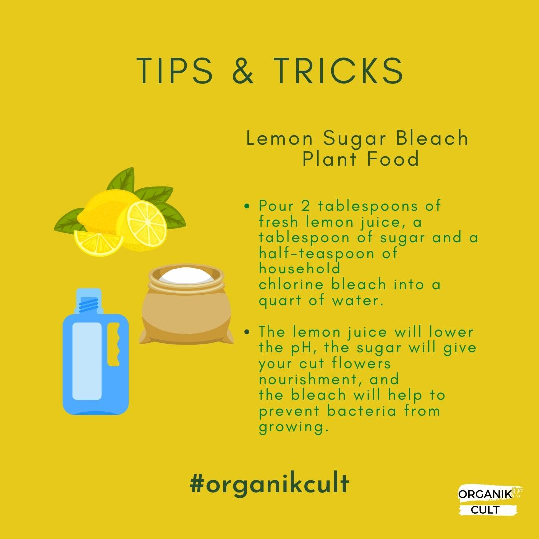 Here's one of our simple tips & tricks to make your organic garden flourish!  #organic #organicfood #nutrients #organiclifestyle #allorganics #naturalingredients #organikcult #organicgardening #organicgarden #organicproduce #healthylifestyle #fitness #chemicalfree