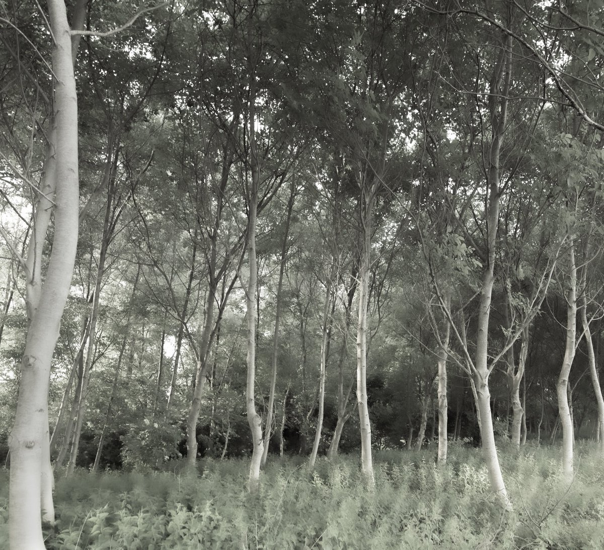 Project 10.000, day 542: Every mind is a kingdom of unmapped mysteries  20mm F5.6 1/125 ISO400 +f1.7   #NatureIsEverywhere #Nature #natuurpunt #naarbuiten   #PhotographyIsLife #TravelTheWorld #PostcardsFromTheWorld #wildlifephotography   #biodiversity #naturephotographerpic.twitter.com/IhCXex1hyN