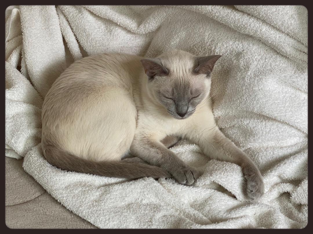 カメレオン猫。 ー アメブロを更新しました#猫のいる生活
