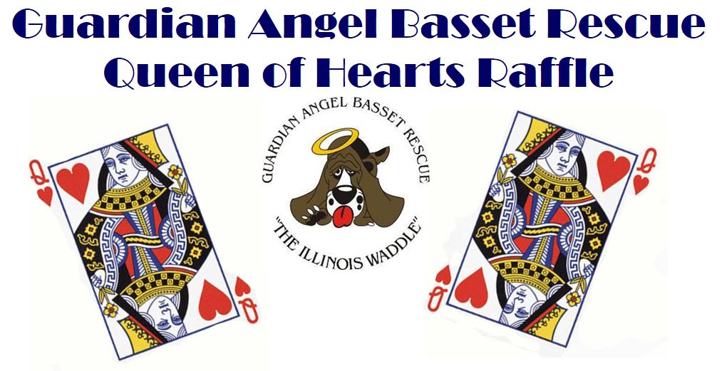 Aarrhhoooo! Round 3 of the #QueenOfHearts Raffle will be drawn TONIGHT at 7pm! Get your tickets for a chance to split the $5350 jackpot and help GABR #RESCUE more #Basset Hounds  #AdoptDontShop #BassetHound