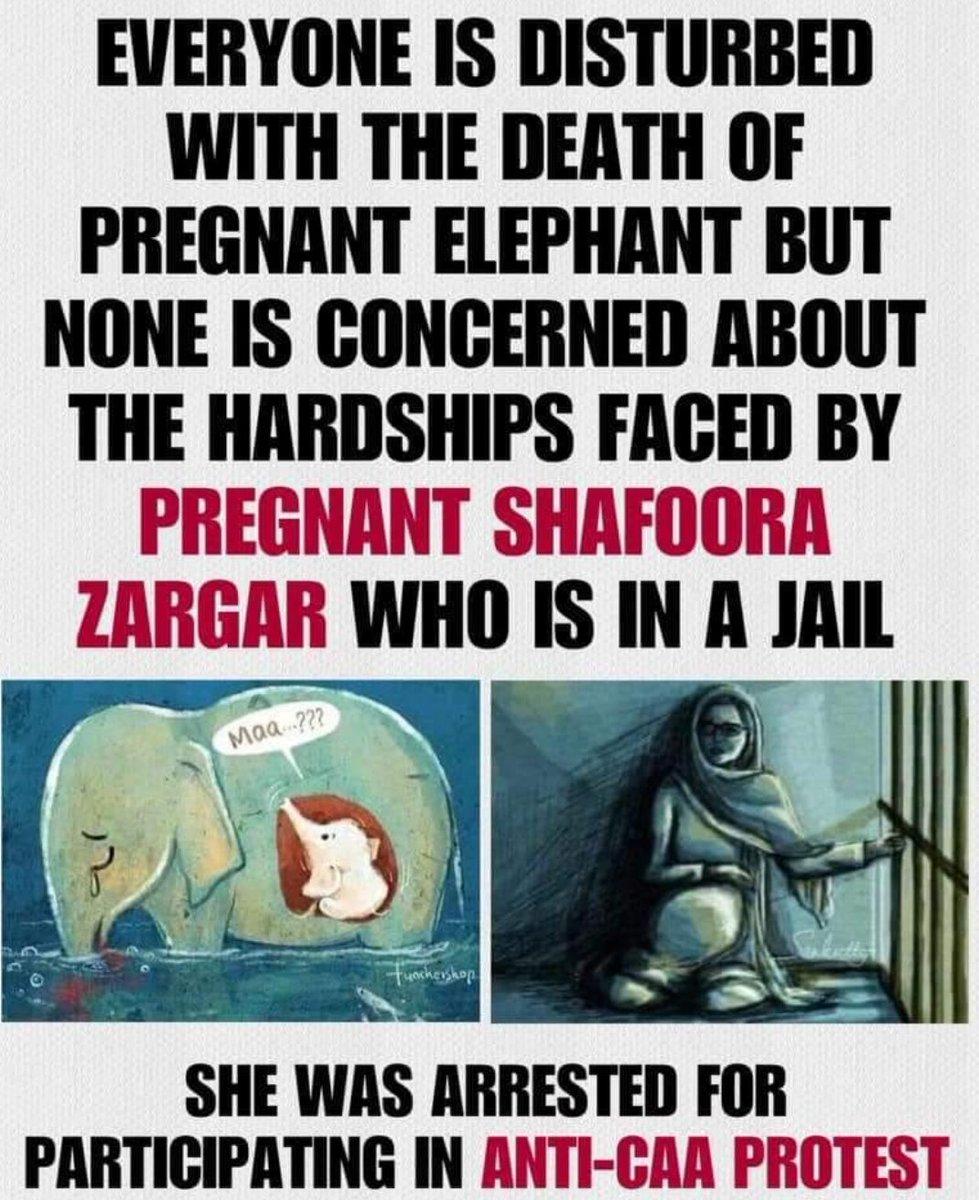 "mophotography's tweet - ""Delhi Police please release Safoora ..."