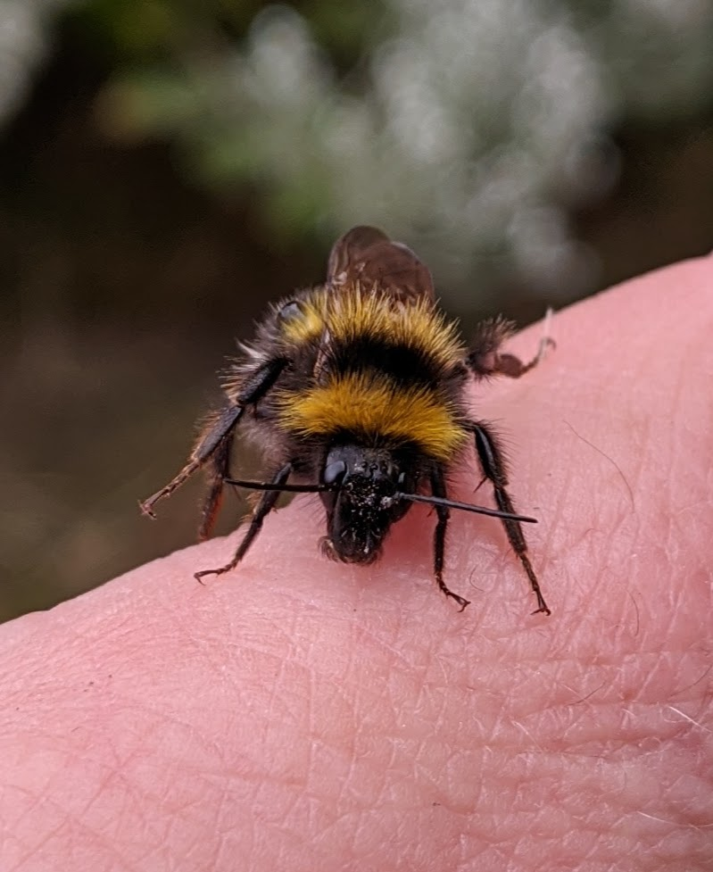 @mrs_coyle Had the same. Warmed him up on my hand for a while and eventually flew away 😊