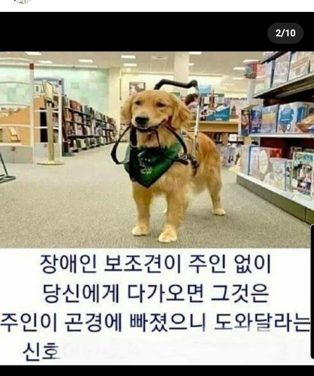 盲導犬がこうやって自分で綱を咥えて他の人の所へやって来たら、 それは主人に何かトラブルがあったという意味。助けてくださいの合図だそうです。 pic.twitter.com/fwMKu2rOL1