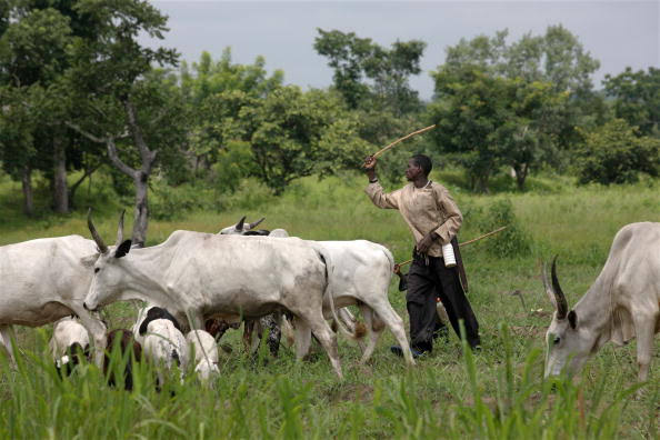 TO ALL FARMERS ON TWITTER..  *•After the rains, some stubborn herdsmen will begin to parade their cows on people's farm provoking tribal clashes.*   *•We don't need to fight them, we can put them off our farm if we plant some plants at the boundary of the farm and<br>http://pic.twitter.com/qtotHbDfgN