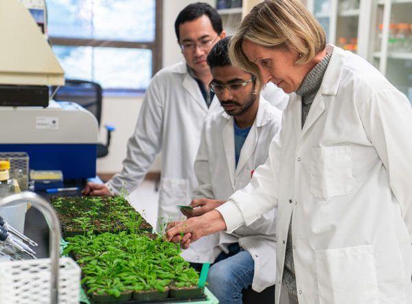 Plants pass on 'memory' of stress to some progeny, making them more resilient https://t.co/5RrQuHUURj via @penn_state #plantscience #epigenetics https://t.co/eXHI1s7upZ
