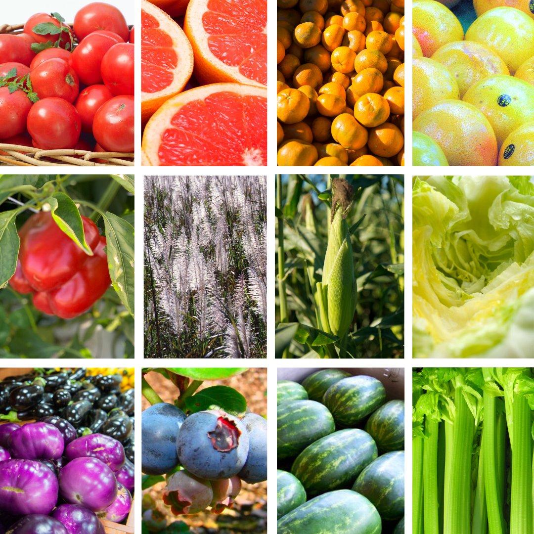All the colors of the rainbow. #ThankAFarmer #FloridaAgriculture