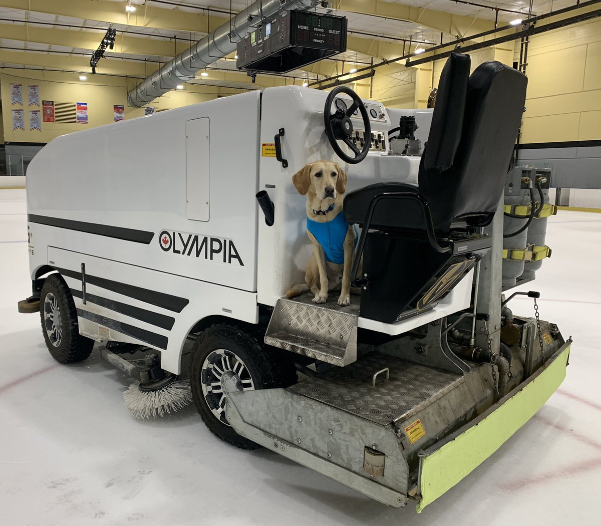Getting so excited to be driving this again! #gobennygo #iceskatingdog @pepsiicearena Sobe Ice Arena #dogsoftwitter #dog #iceskating pic.twitter.com/ocPTb1JdUE