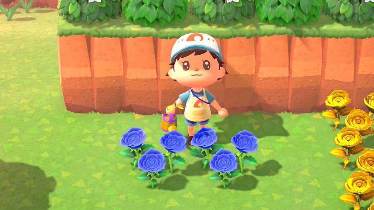【インタビュー】あつ森、花の交配はどれくらい正しいの? 「青いバラ世代」のかはく研究員に聞いてみた現実世界では20年以上かかって作られた遺伝子組み換えの青いバラ。あつ森では1カ月で咲かせられると聞いた水野研究員「僕もあつ森やろうかなって思いますよね(笑)」。