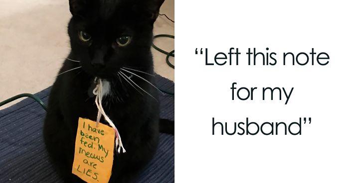 We all need a laugh today: http://boredpanda.com/pet-shaming/  What would your pet's sign say? Post the answer below! #daviesah #petshaming #boredpanda #funnystuff #funnypetstuff #yubacity #yubasutter #suttercounty #marysville #pethumor #dogsofsactownpic.twitter.com/QFU1X77aFP