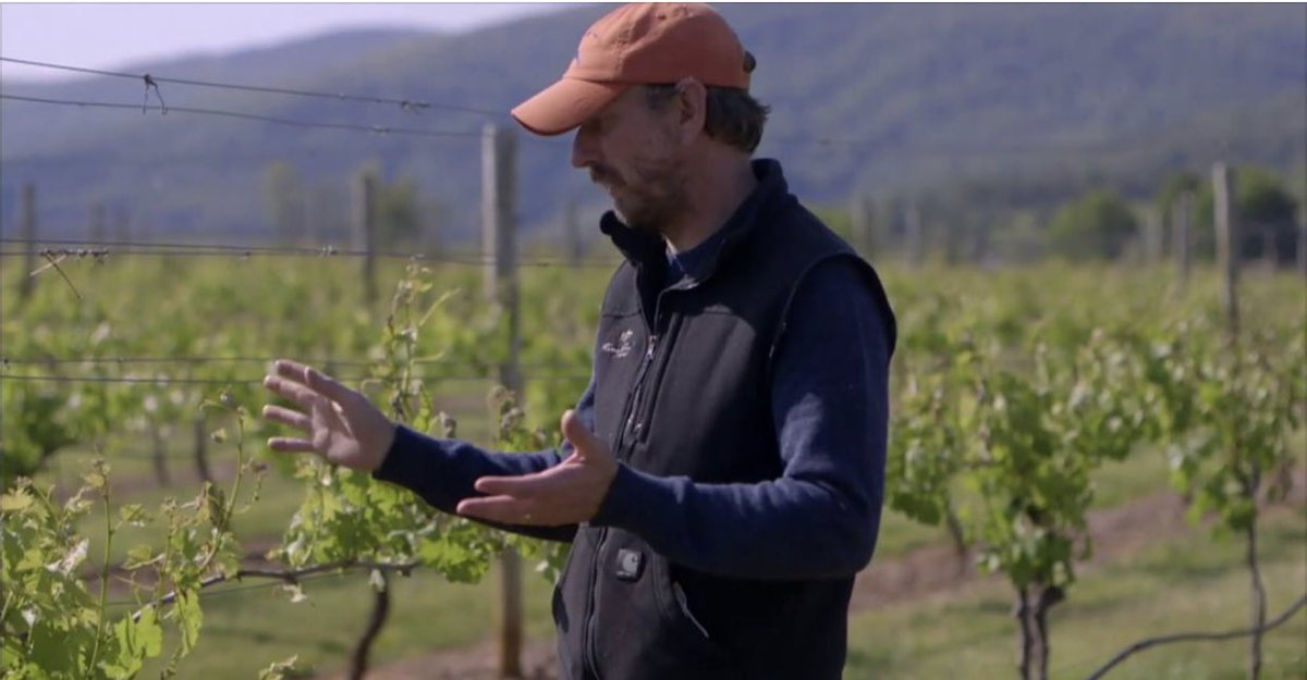 Watch Winemaker @FinotMatthieu & Vineyard Manager Carrington King discuss frost damage that occurred a few weeks ago. If you'd like to see more behind the scenes footage of life on Roseland Farm, make sure you Subscribe to our YouTube channel. https://youtu.be/SUvmcP1AB6opic.twitter.com/I7phzsd5kH – at King Family Vineyards