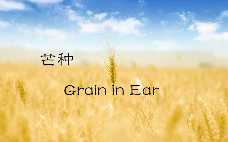 """#TNB """"Grain in ear"""" means the grains are mature. It happens around June 5 every year when the Sun reaches the celestial longitude of 75 degrees."""