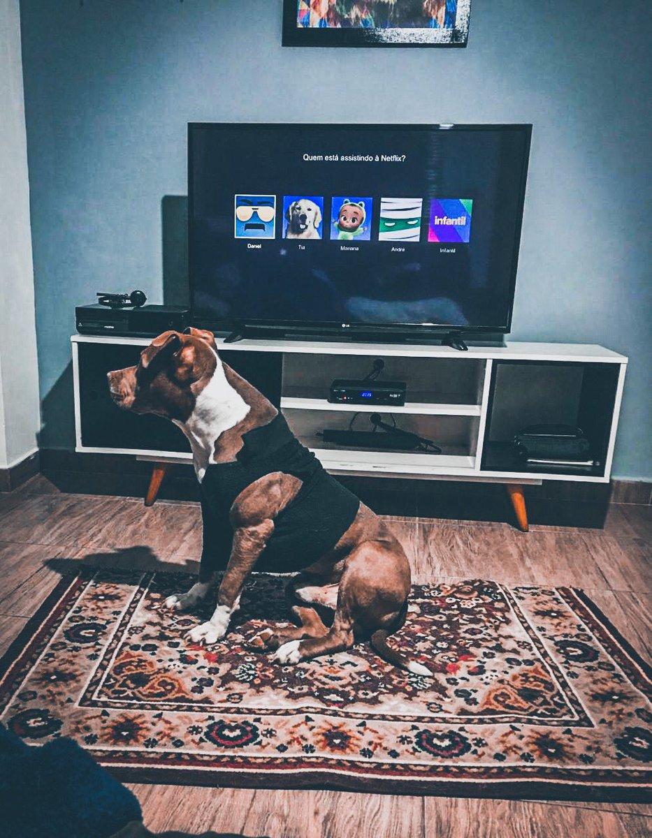 Dog night! #quarentena #QuarentineLife #dog #pitbull #labrador