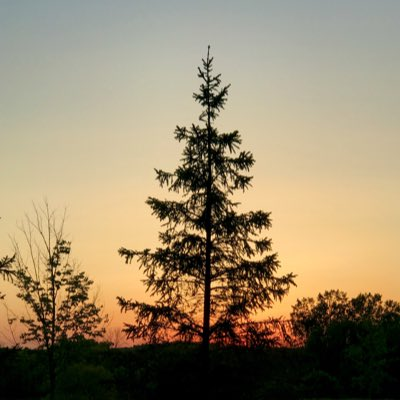 #pine #NewProfilePic #menomoneefalls #Atardecer #sunset