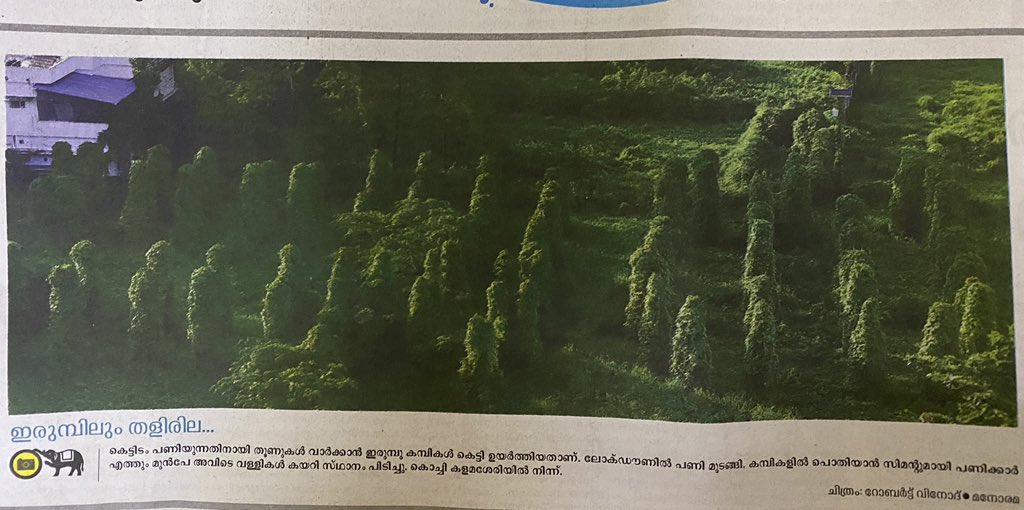 Not a forest nor a green garden! It's a concrete site in Kochi where the plants grow over the cast-iron columns. #lockdowneffect Pic in @MalayalaManormapic.twitter.com/xodpSGEUBu
