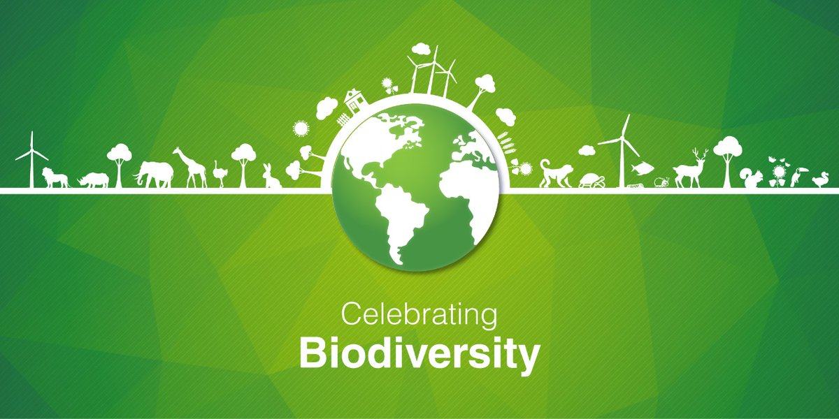 This #WorldEnvironmentDay, we celebrate our life force through consistent actions #ForNature such as recycling water and promoting #biodiversity around our sites.  #SmarterSteelBetterWorld https://t.co/P8iaEW3LEG