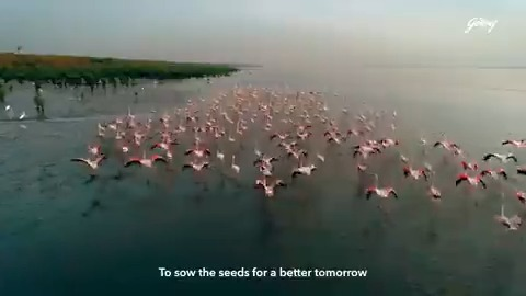 For eight decades now, our conservationists have been working tirelessly to protect the fragile ecosystem of mangroves at Vikhroli, Mumbai. On this #WorldNatureConservationDay, we commit ourselves to continue putting our planet before profit. #GodrejAndBoyce #GoodAndGreen https://t.co/k7IE5RBU9X