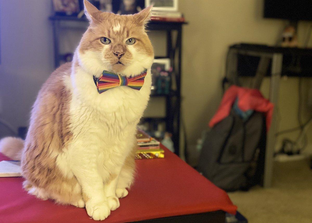 Purrfectly posh  #cats #CatsOfTwitter #fridayvibes #PrideMonth #pets #friyaypic.twitter.com/IMecY1CqmK