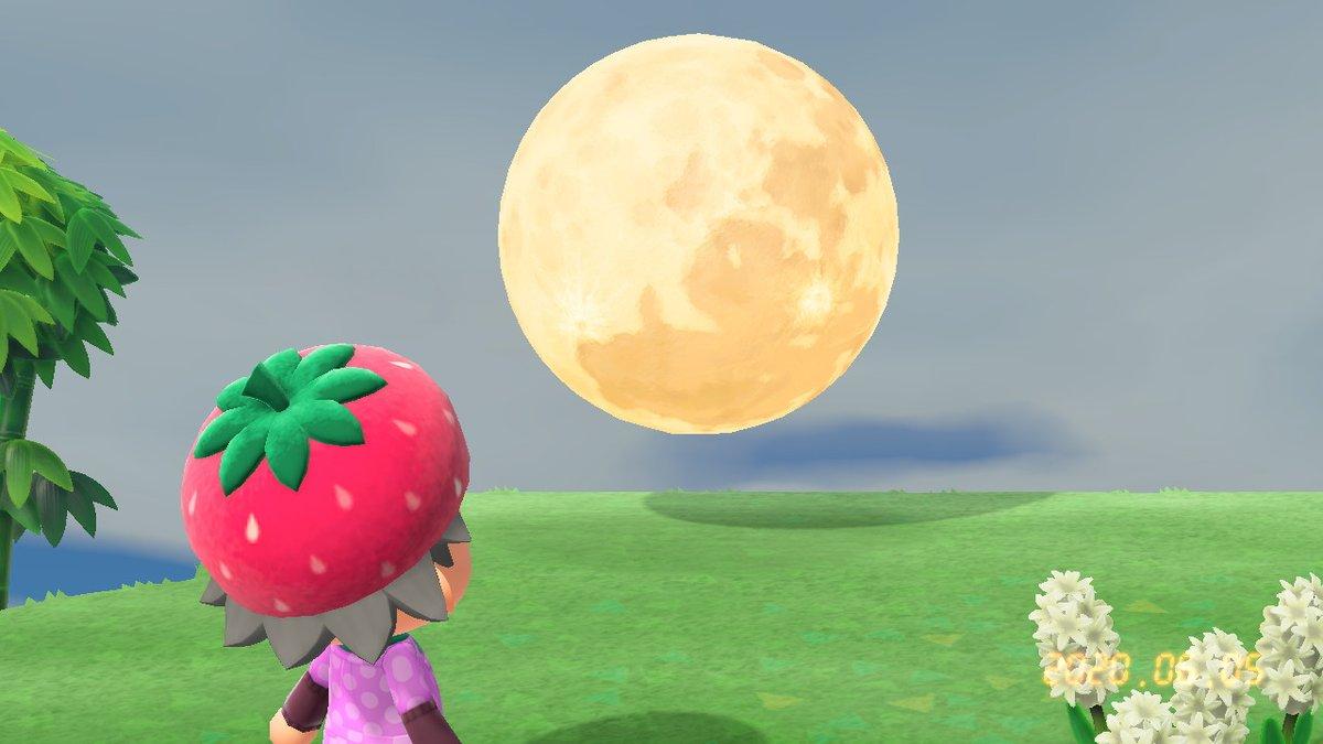 今夜は満月で、6月の満月はストロベリームーンというらしいです。美味しそうな響きでとてもよいと思います。#うしです #ストロベリームーン #あつまれどうぶつの森