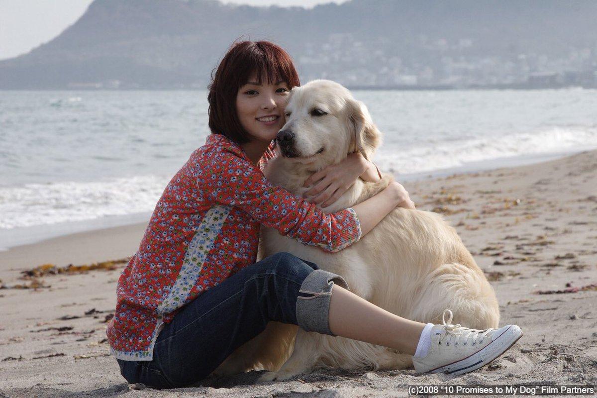 """เบคอนวิปครีม on Twitter: """"เจอ 10 promises to my dog ไม่เคยกล้าดู ..."""