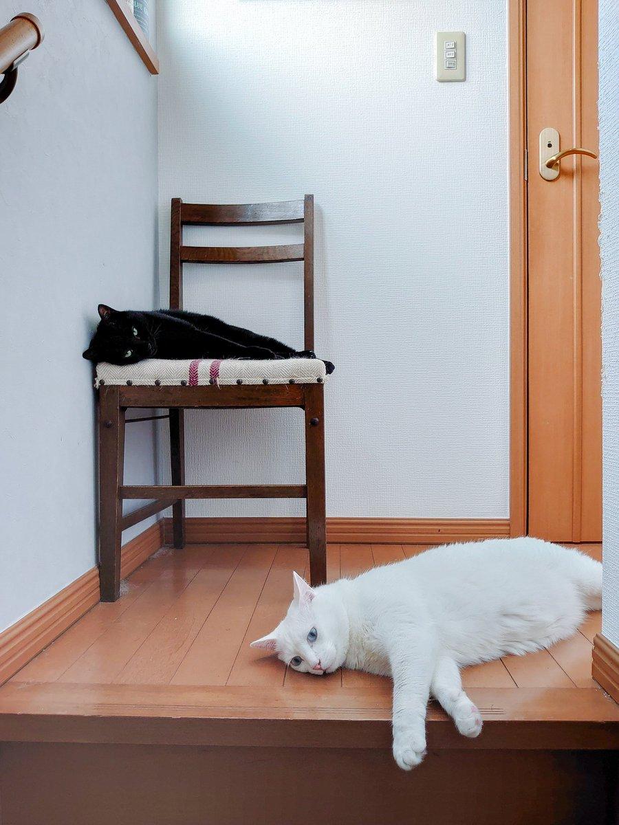 猫のために誰もいなくても冷房付けてるのに、結局暑い2階でだれてる😩エアコン苦手なんだよね。猫のために氷枕作るようにするかなぁ🧊