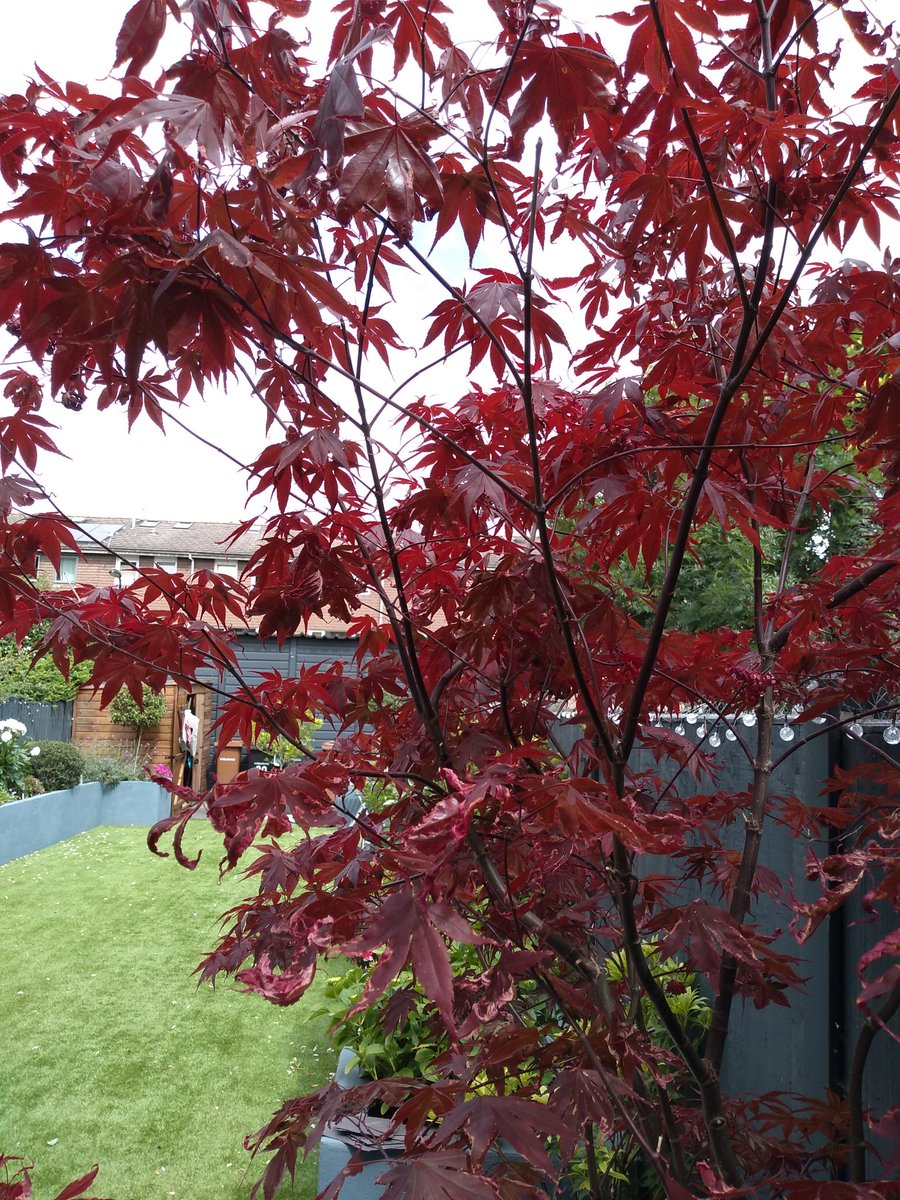 Today's pics from my client's garden. #Hackney #garden #E9 #fridaymorning #gardenshour #Hackneygardener https://t.co/tre7xUl1I8