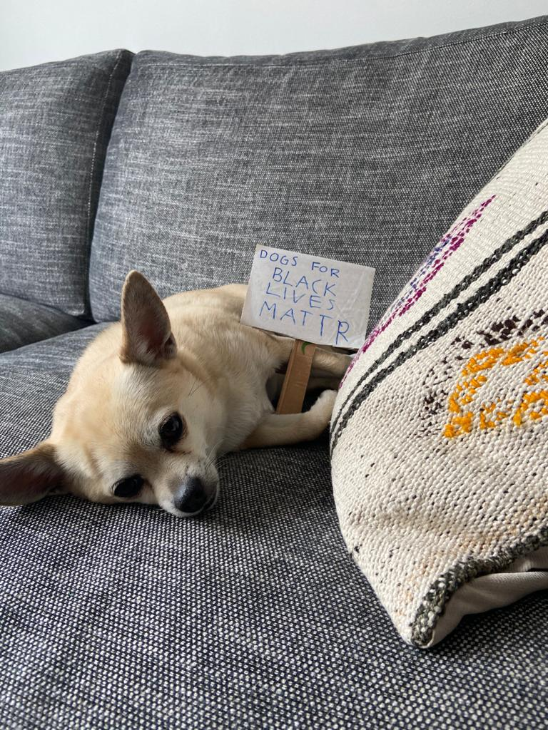 Even the chihuahua gets it