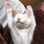 寝相が強烈すぎる実家の猫!寝床のチョイスが最高に可愛い!