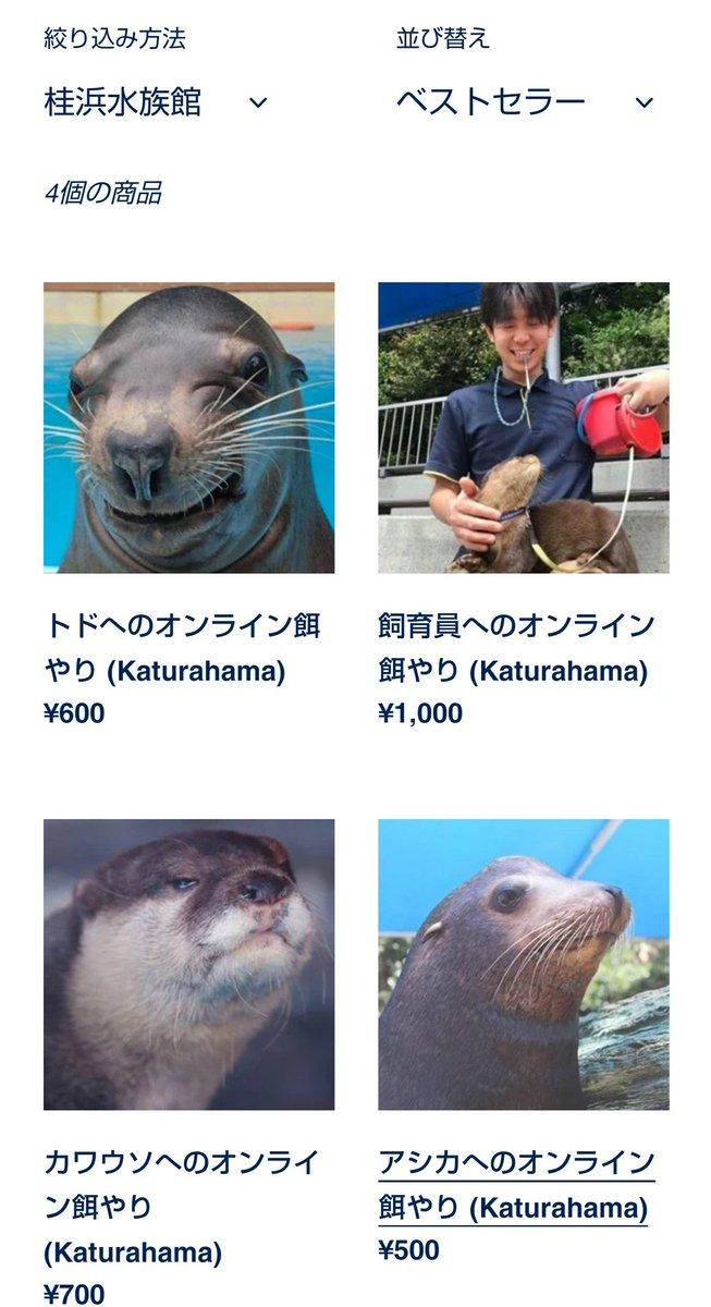 桂浜水族館の動物たちにオンラインで餌をあげることが可能?飼育員にも与えられる!